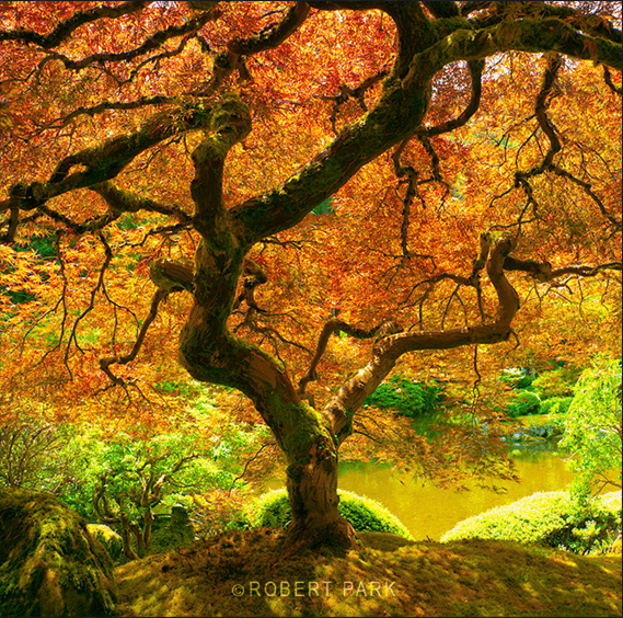 """Prosperity"" Japanese Garden, Portland, OR. - 2008"